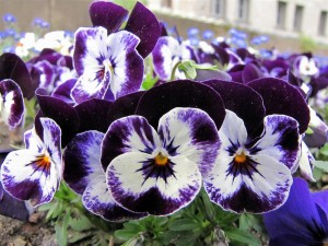 Blumen1 (Mittel)