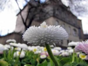 Blumen2 (Mittel)