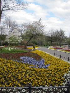 Blumenmeer (Groß)