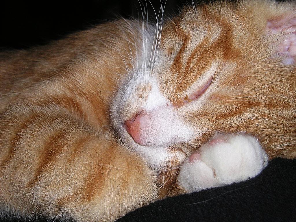 mein Kater Felix im Winterschlaf an Heiligabend